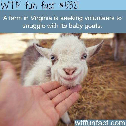 How Cute Is That! ...I Volunteer!  ~WTF? funny, interesting facts