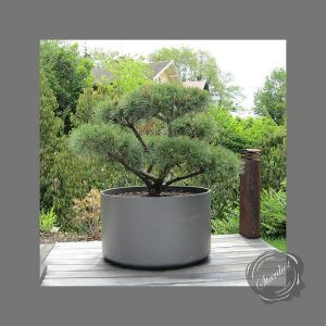 Large Outdoor Pots And Planters