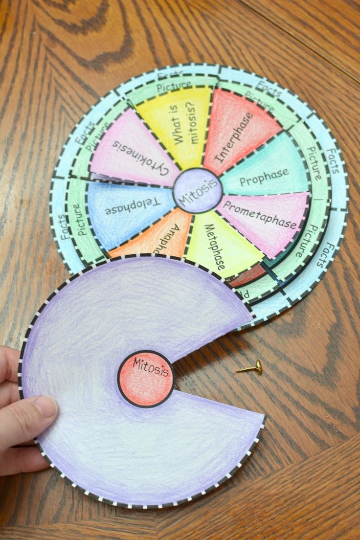 Mitosis Foldable                                                                                                                                                                                 More