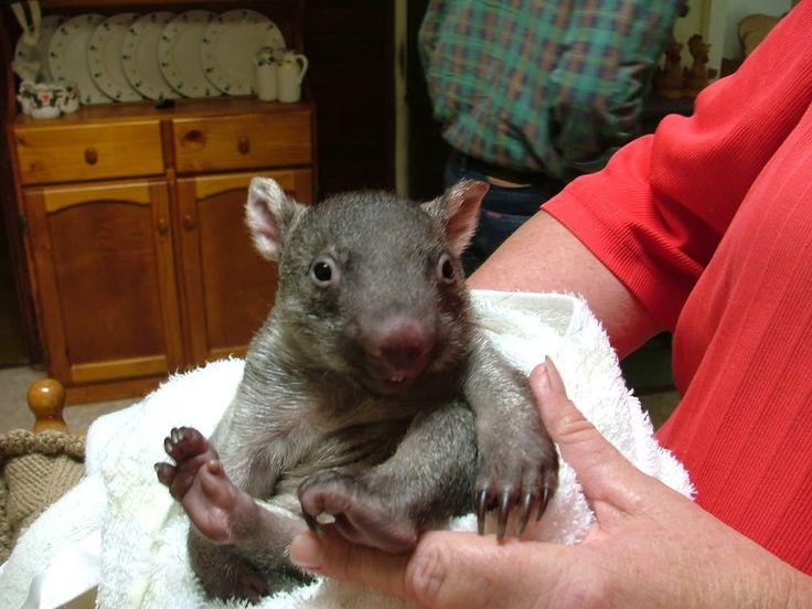 wombat baby @Molly Simon Beck