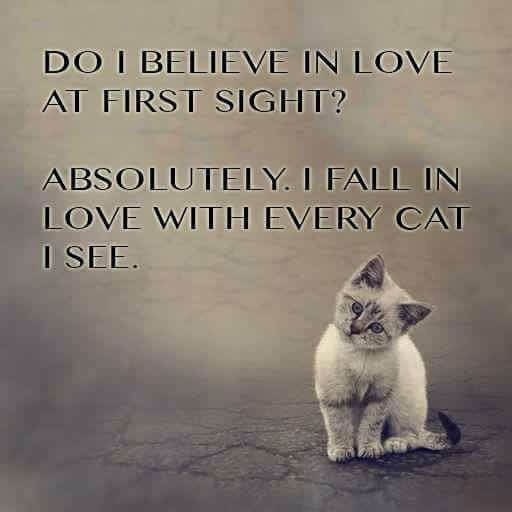 Amazing Quotes About Love At First Sight : 1000+ images about Cat Lover: Quotes & Sayings on Pinterest Rainbow ...