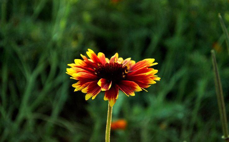 nature # nature # flowers #photos #photoshop #fotografia
