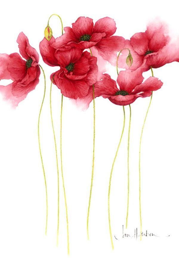Меня всегда завораживали красивые рисунки, особенно рисунки акварелью. И, конечно, как многие девушки, я очень люблю цветы. Поэтому акварельные цветы для меня это источник бесконечного вдохновения. Мне кажется именно акварельные цветы получаются самыми воздушными, легкими, нежными, как будто настоящими, но на бумаге. Когда-то давно я встретила на просторах интернета парочку рисунков Jan Harbon и сохранила их себе в папочку «Вдохновение».