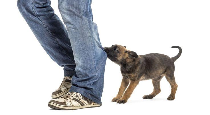 Pierwsza pomoc i leczenie po ugryzieniu przez psa