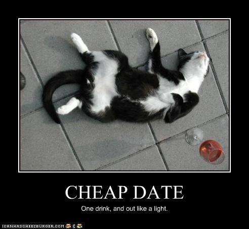 Cat Dating Video