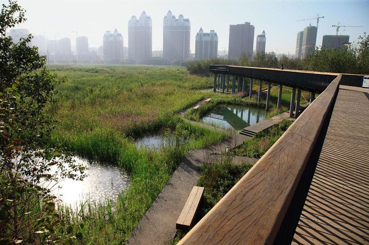 The elevated walkway  around Qunli National Urban  Wetland. This storm-water  project on the eastern  outskirts of Haerbin City in  northeast China is a national  reserve. The 34.2 hectares  of former wetland are  surrounded on four sides by  roads and dense development.  32 million m2 of buildings will  be constructed here in the  coming two decades