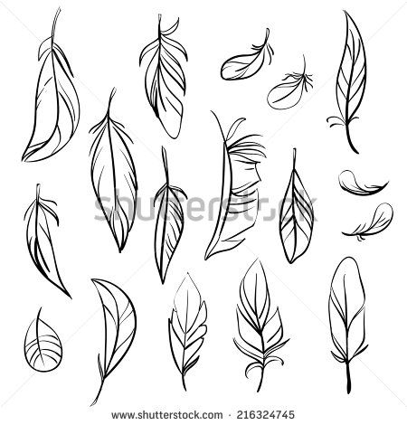 Vector set of different hand drawn feathers - Shutterstock Premier