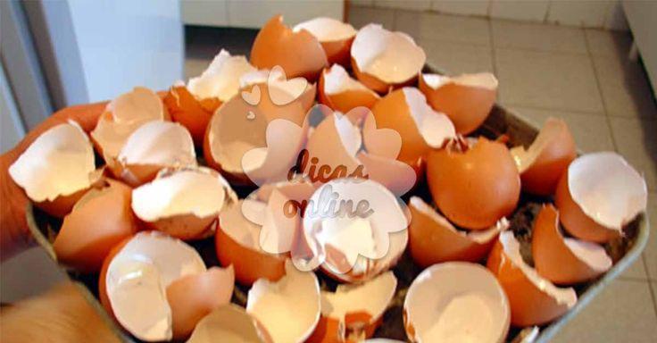 Incrível! Utilidades alternativas para as cascas de ovo! - # #cascadeovo
