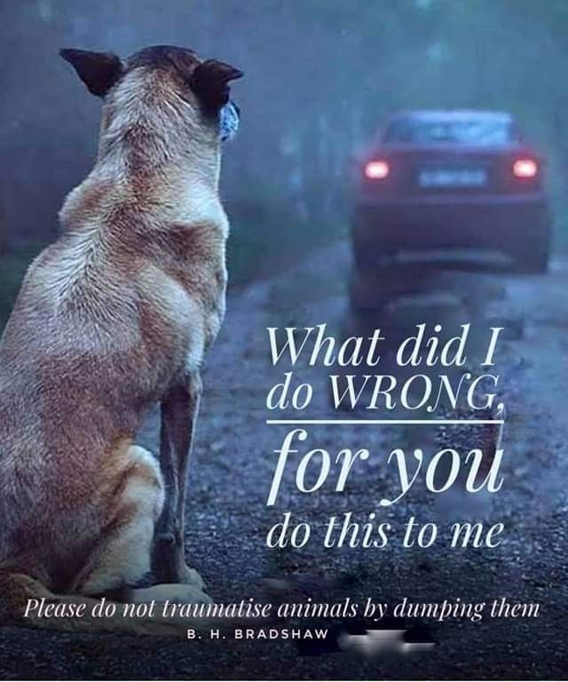 Pin By Mandarinkitty On Adopt Dogs Urgent Or Foster Animal Quotes Baby Animals Dogs