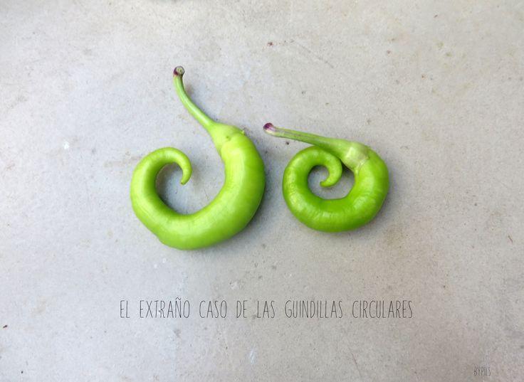 El extraño caso de las guindillas circulares . http://nonperfect.com/2014/09/11/el-extrano-caso-de-las-guindillas-circulares/
