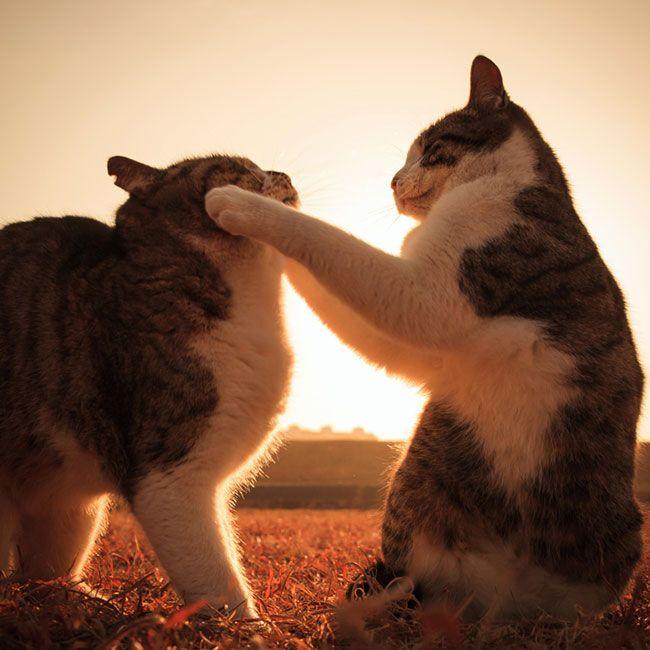 Beautiful Sunset Cats