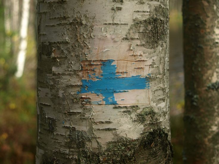 Painted on a birch tree.