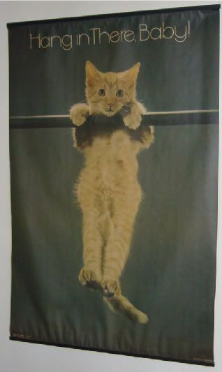 Best images about hang in there baby on pinterest cats