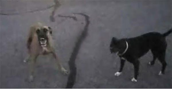 2 Άγρια Σκυλιά Επιτίθενται σε έναν Αστυνόμο. ΑΥΤΟ που τους Έκανε όμως..