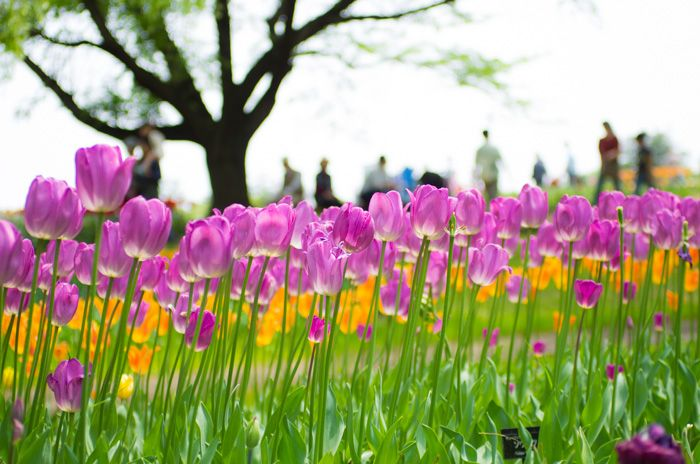 It is a government-managed park representing Japan. http://japan-fun.net/?p=269