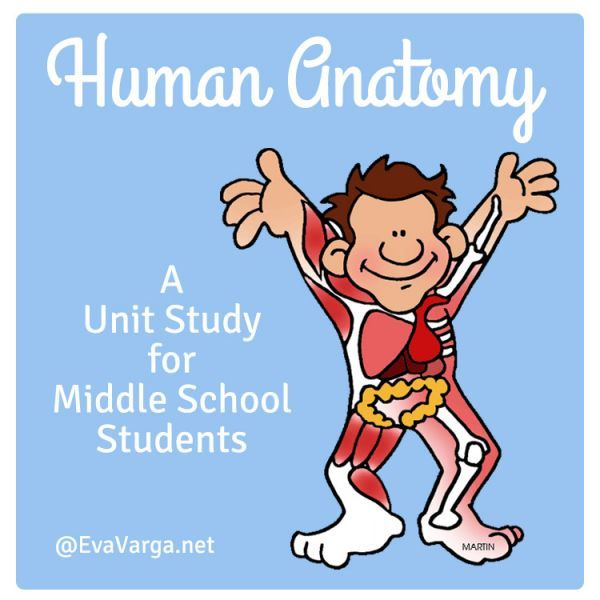 Human Anatomy - Middle School Unit Study @EvaVarga.net