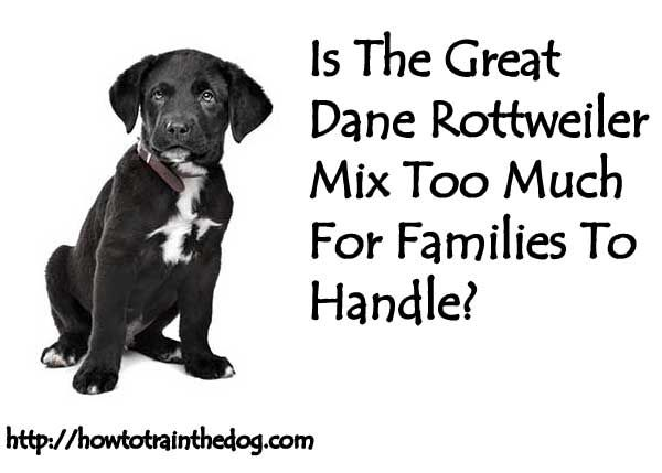 Is The Great Dane Rottweiler Mix Too Much For Families To Handle?