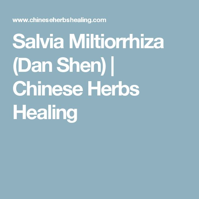 Salvia Miltiorrhiza (Dan Shen)   Chinese Herbs Healing
