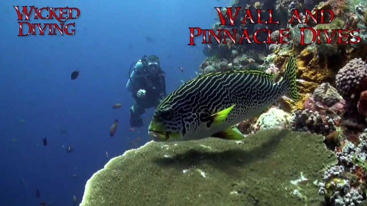 Diving Komodo National Park. Wicked Diving operates in the Komodo National Park. Dragons, Mantas and Pirate ships - this region is as exotic and exciting as can be! Komodo diving is...Wicked! Why not join our Komodo Liveaboard trips?