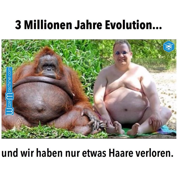lustige pferdebilder mit sprüchen | Evolution Witzig- Fetter Mann und Orang Utan Affe