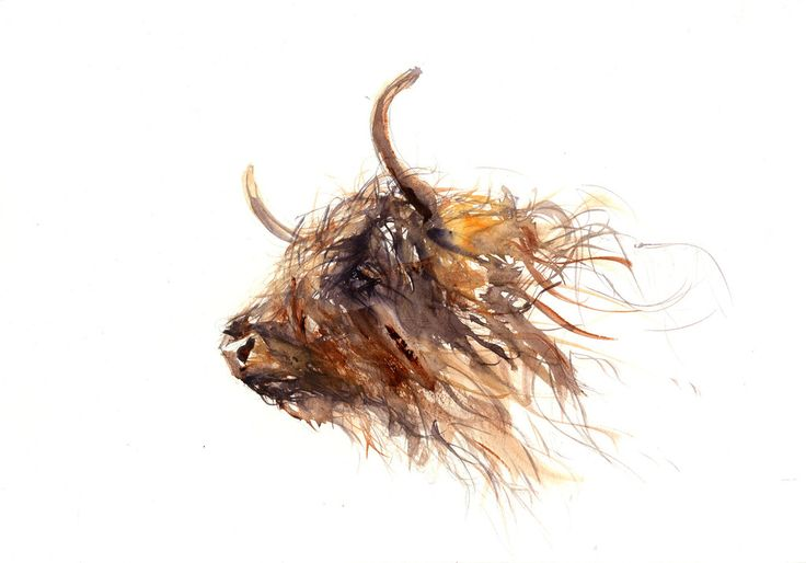 LIMITED EDITON PRINT Highland Cow