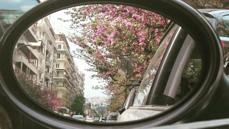 Spring Awakenings in Thessaloniki! ☀️🌸🌺🌼🌹