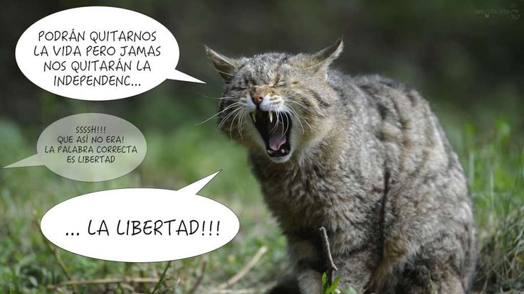 los gatos son independientes