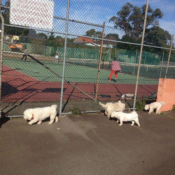Marrickville Park in Marrickville, NSW