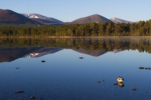 Pine needles, singletrack, mountains, blue skies- Scotland where else?