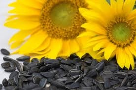 Ruby Rave: Helianthus Annuus (Sunflower Seed Oil Extract)
