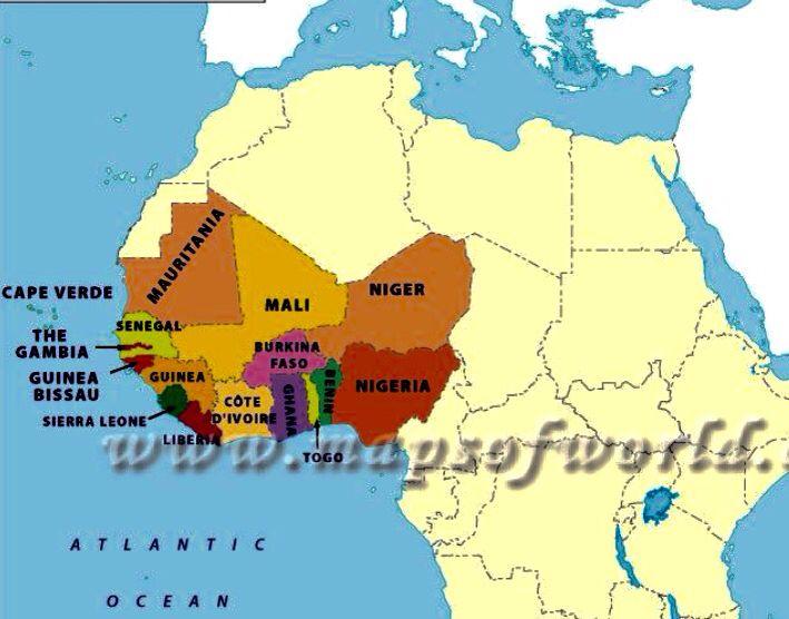 12 best Guinea images on Pinterest Australia beach Dieren and Dios