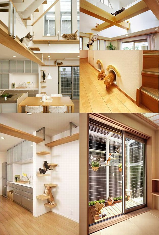 This is an Interesting design for a house if I had a cat as a pet.