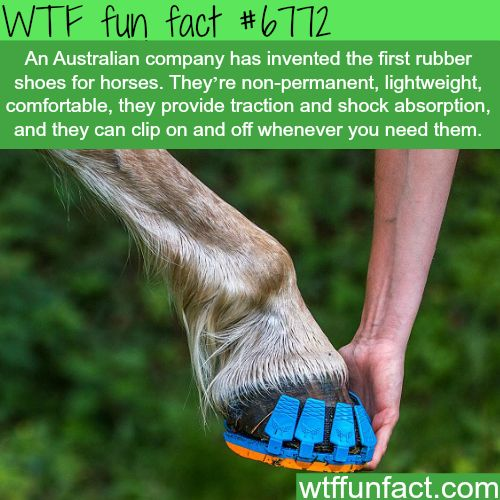 Australian company made the first rubber shoes for horses - WTF fun fact