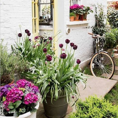 Happy Easter weekend! We'll be looking at flowers for the next two days, and we're starting with Rita's London garden (pic by @uxio10) #home #decor #garden #homeexterior #flowers #blooms #inspiration #ideas #easter #weekend #blooms garden by @sarahlhusband