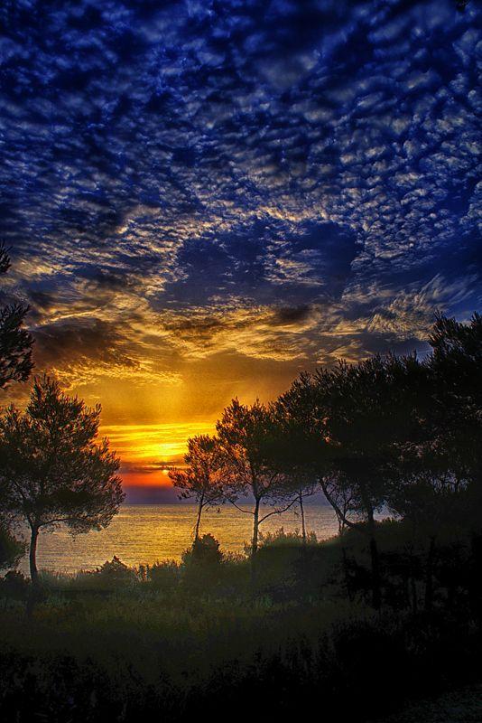 early morning skies  sunrise  dawn  trees  cloudy sky