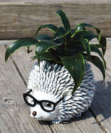 Another great find on #zulily! Hedgehog in Glasses Planter #zulilyfinds