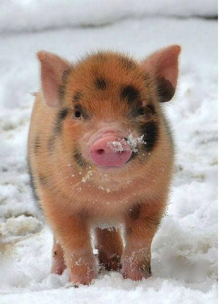 I love you,little piggy!!!!