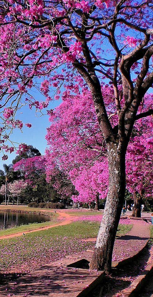 Ibirapuera - São Paulo - Brasil