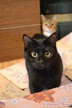 Знакомство с зонтиком... (Много фото!!!) - Любители кошек. - Страна Мам