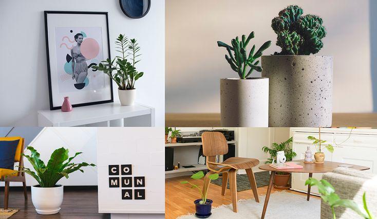 ¿Plantas interiores? ¡Sí! Las plantas de interior no son solamente una lindísima forma de decorar. Su valor va mucho más allá de lo estético por sus múltiples y maravillosos beneficios. Se los compartimos para que no duden en sumar verde a sus ambientes!