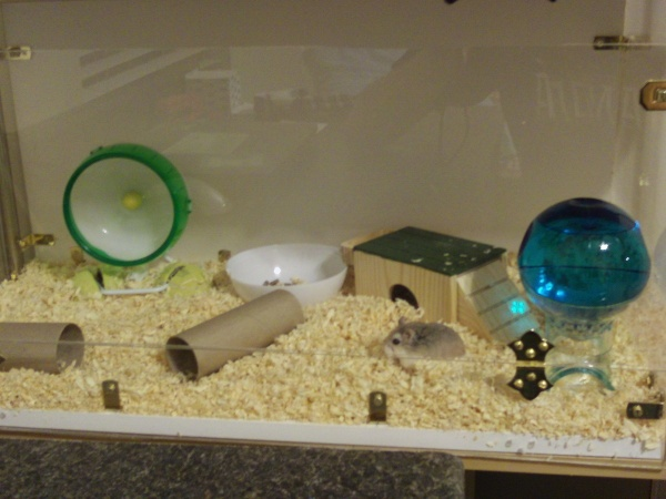 10 best hamster aquarium images on pinterest hamster for Fish tank for hamster