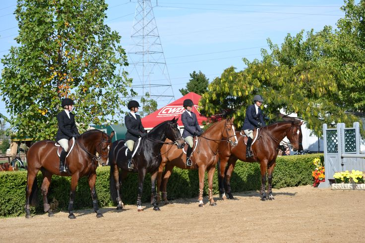 Work-off line up from the Norcal Senior Medal Finals a few years ago! #charleighscookies #equitationqueen #equestrian