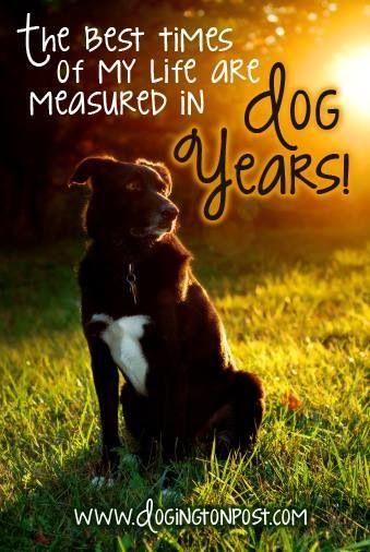 Are Cat Years Measured Like Dog Years