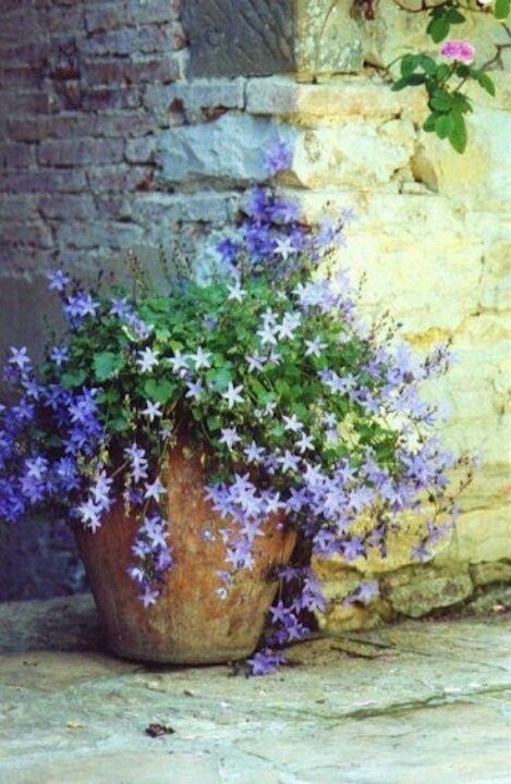old pottery and stone, rambling flowers...