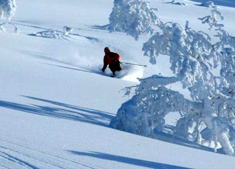 Powder skiing in Japan with Pure Powder