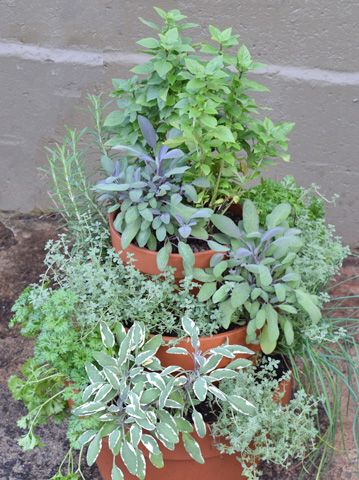 Have an herb garden in even the smallest spaces Plant this herb garden tower DIY Armstrong Garden Centers