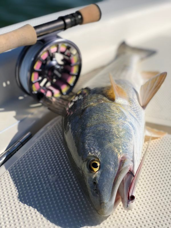 Sight and Fly-Fishing Destin, Fl - Lions Tale Adventures