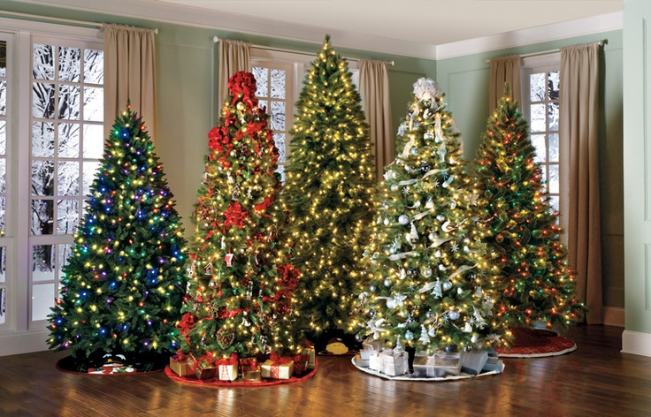 Multiple Christmas Trees In One Room?...one Day