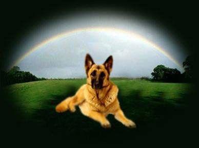 Ponte do arco-íris - verdades