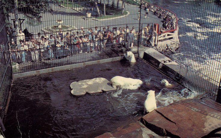 Zoo de St,-Felicien-Ancien Enclos des Ours Polaires